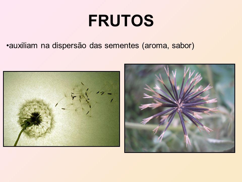 auxiliam na dispersão das sementes (aroma, sabor)