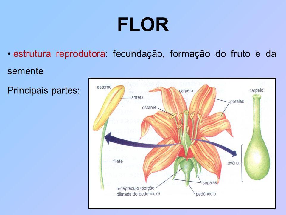FLOR estrutura reprodutora: fecundação, formação do fruto e da semente