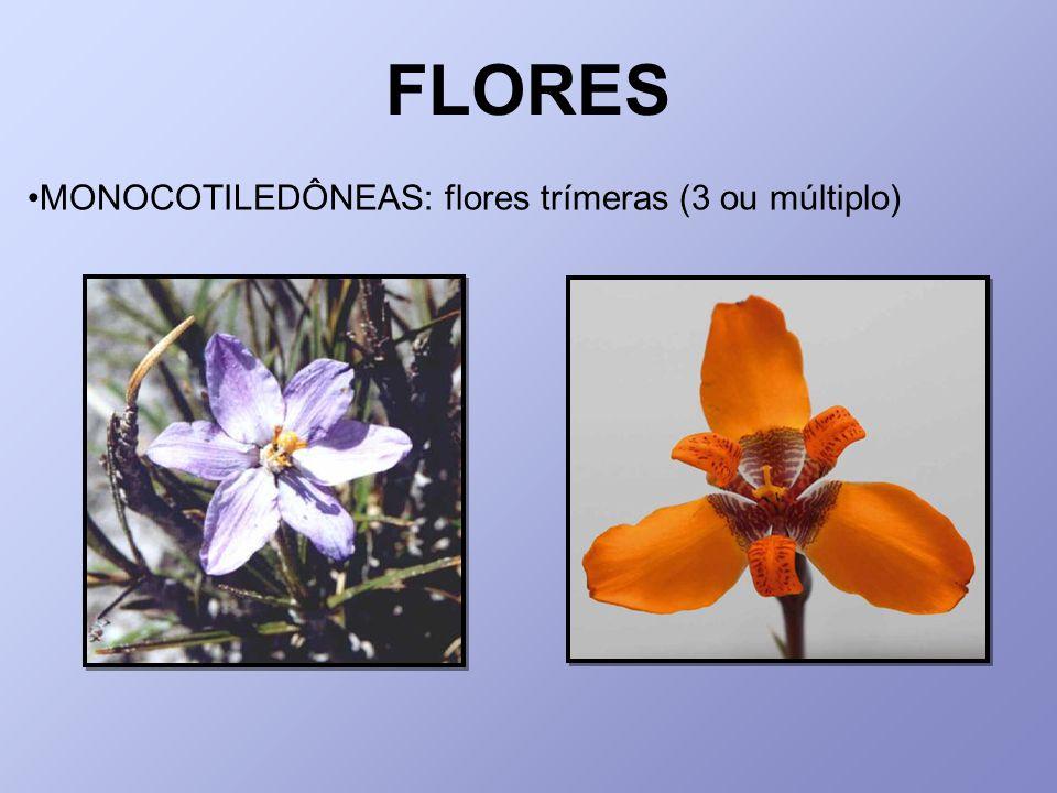 MONOCOTILEDÔNEAS: flores trímeras (3 ou múltiplo)