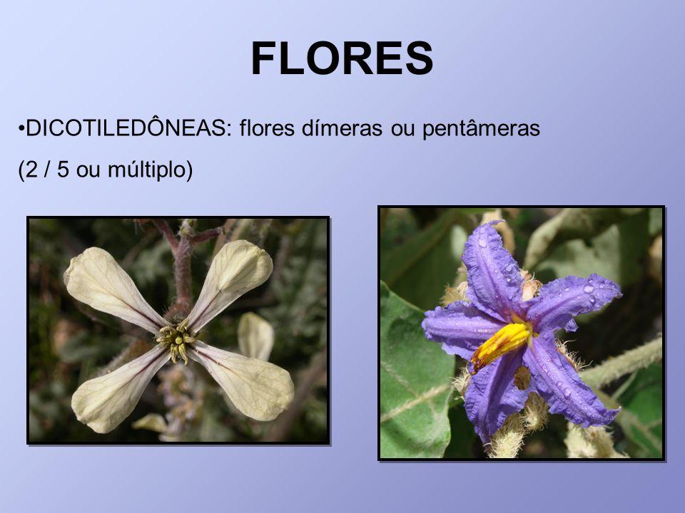 DICOTILEDÔNEAS: flores dímeras ou pentâmeras (2 / 5 ou múltiplo)
