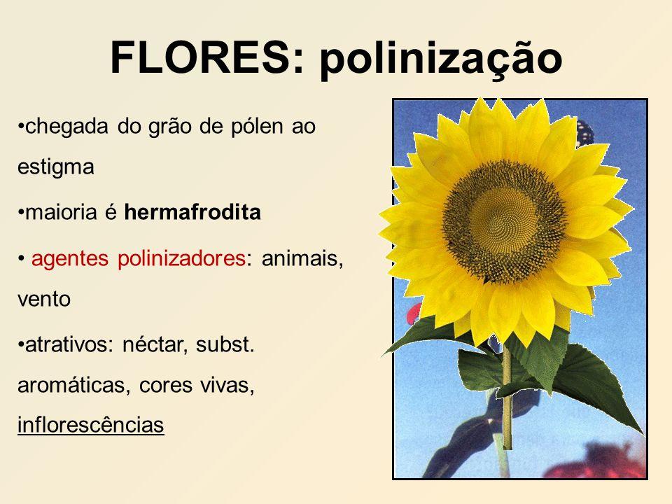 FLORES: polinização chegada do grão de pólen ao estigma