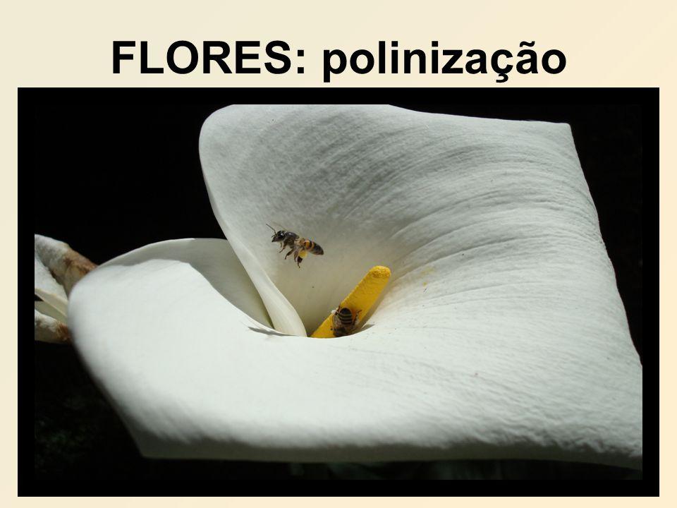FLORES: polinização
