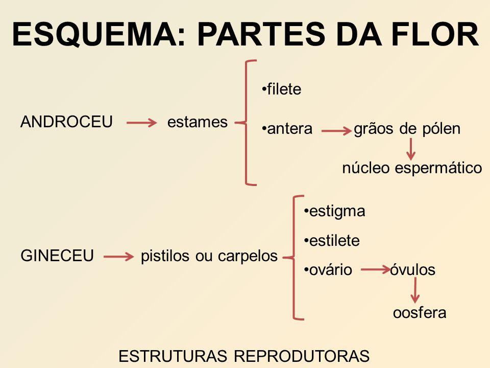 ESQUEMA: PARTES DA FLOR