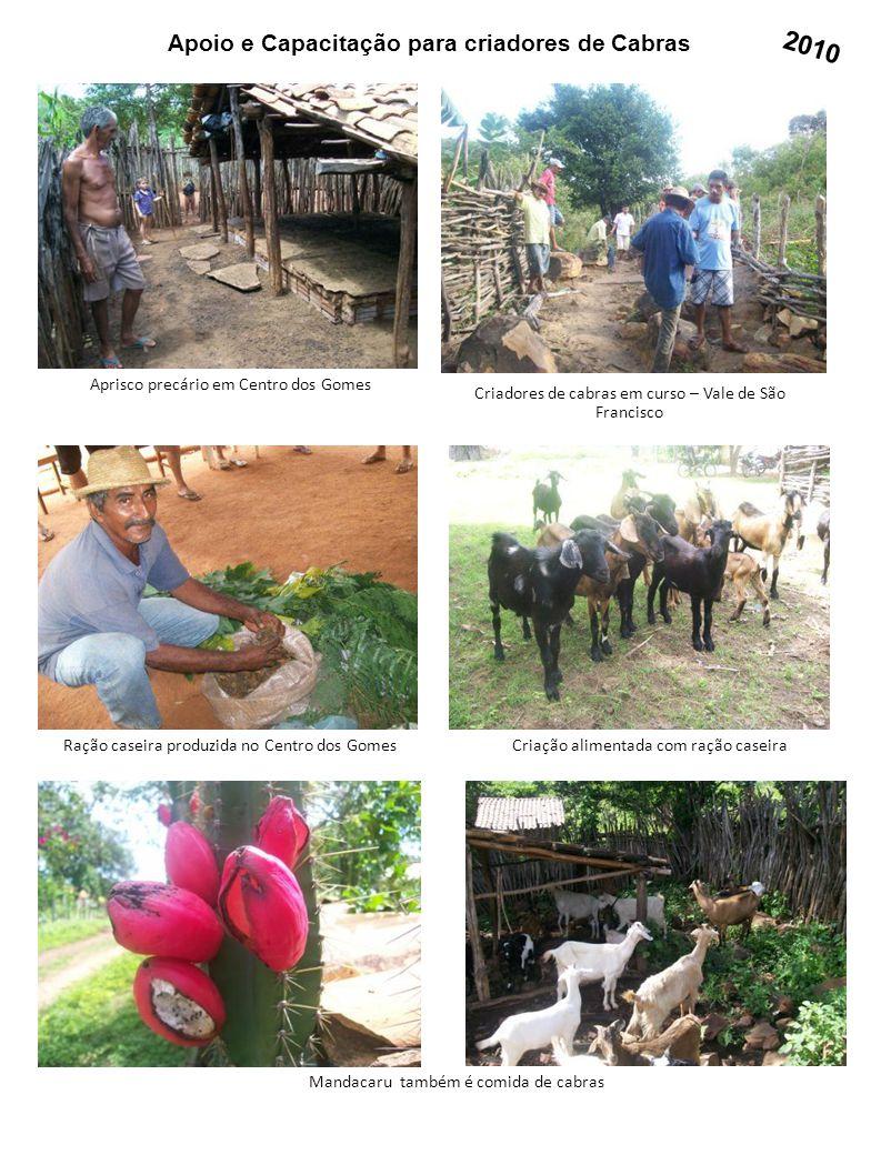 Apoio e Capacitação para criadores de Cabras