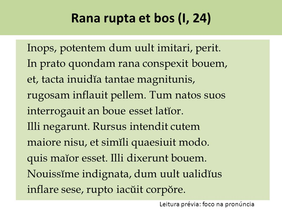 Rana rupta et bos (I, 24)