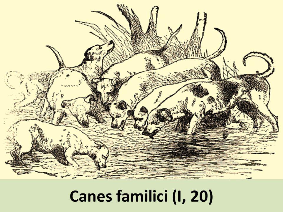 Canes familici (I, 20)