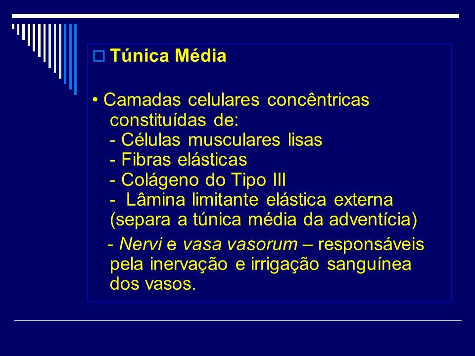 Túnica Média