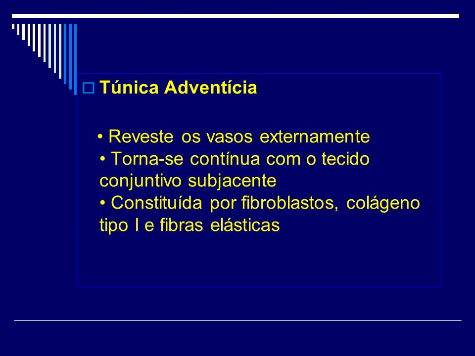 Túnica Adventícia