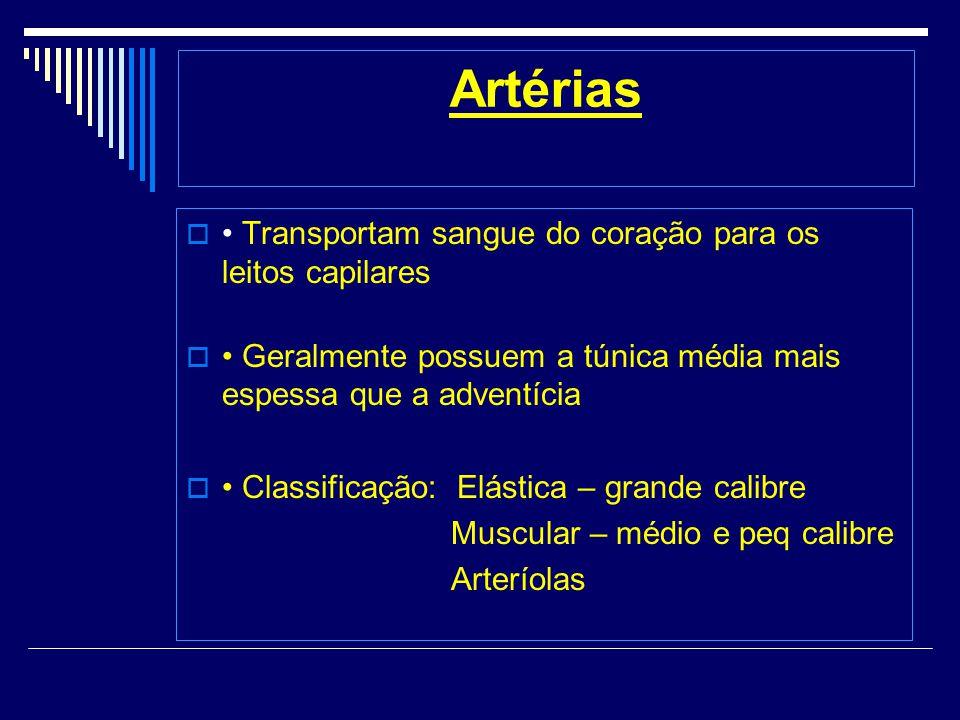 Artérias • Transportam sangue do coração para os leitos capilares