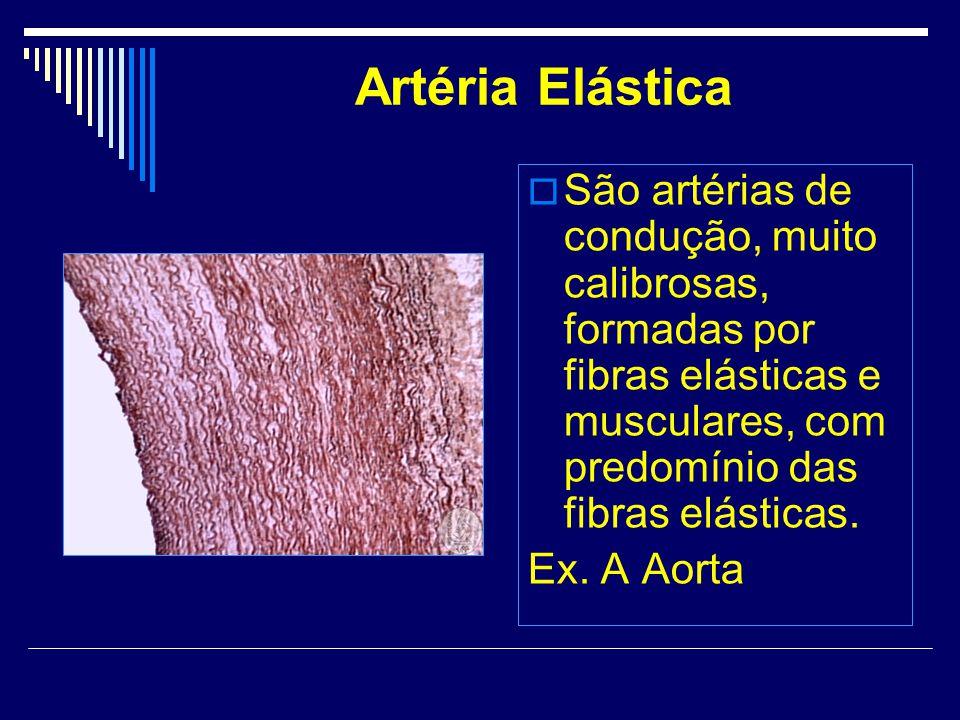 Artéria Elástica São artérias de condução, muito calibrosas, formadas por fibras elásticas e musculares, com predomínio das fibras elásticas.