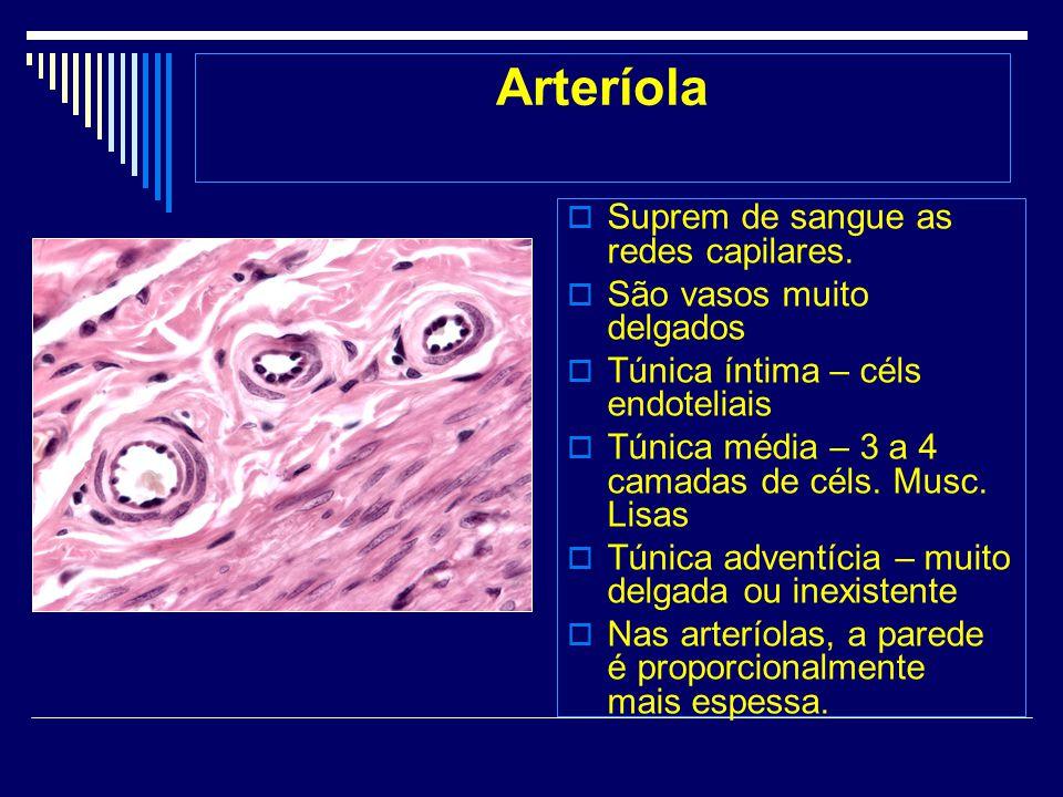 Arteríola Suprem de sangue as redes capilares.