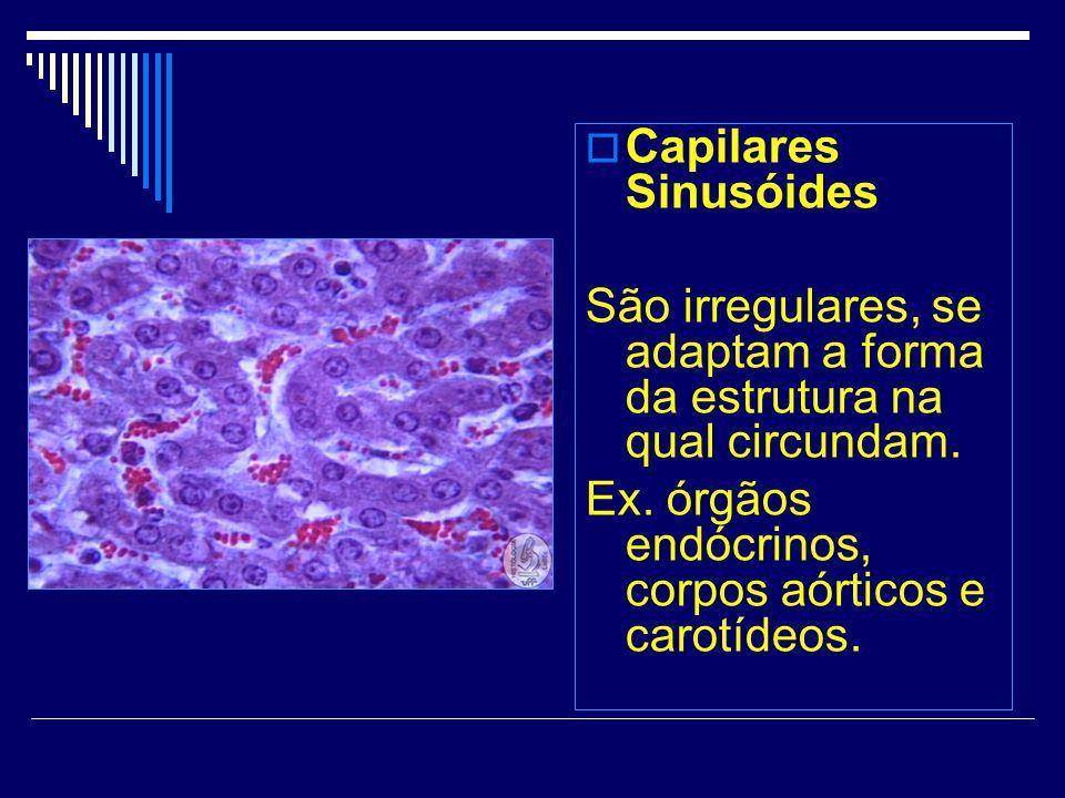 Capilares Sinusóides São irregulares, se adaptam a forma da estrutura na qual circundam.