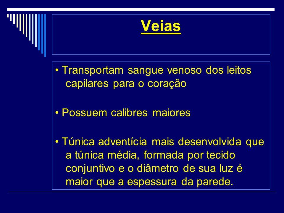 Veias • Transportam sangue venoso dos leitos capilares para o coração