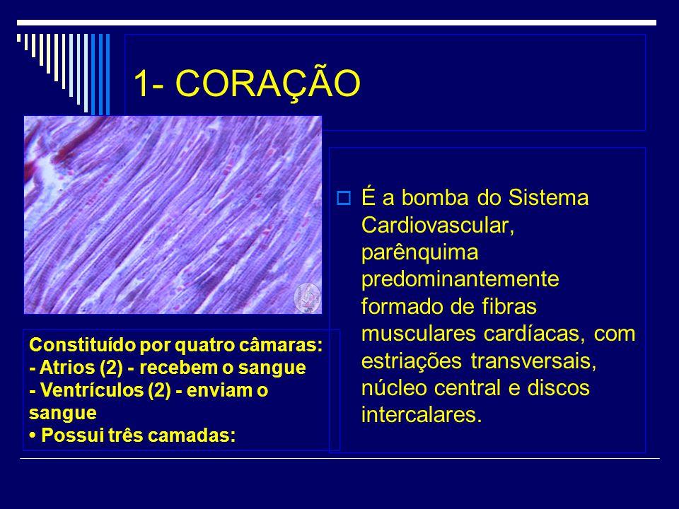 1- CORAÇÃO