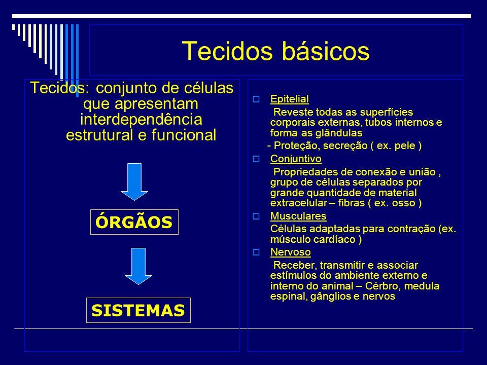 Tecidos básicos Tecidos: conjunto de células que apresentam interdependência estrutural e funcional.