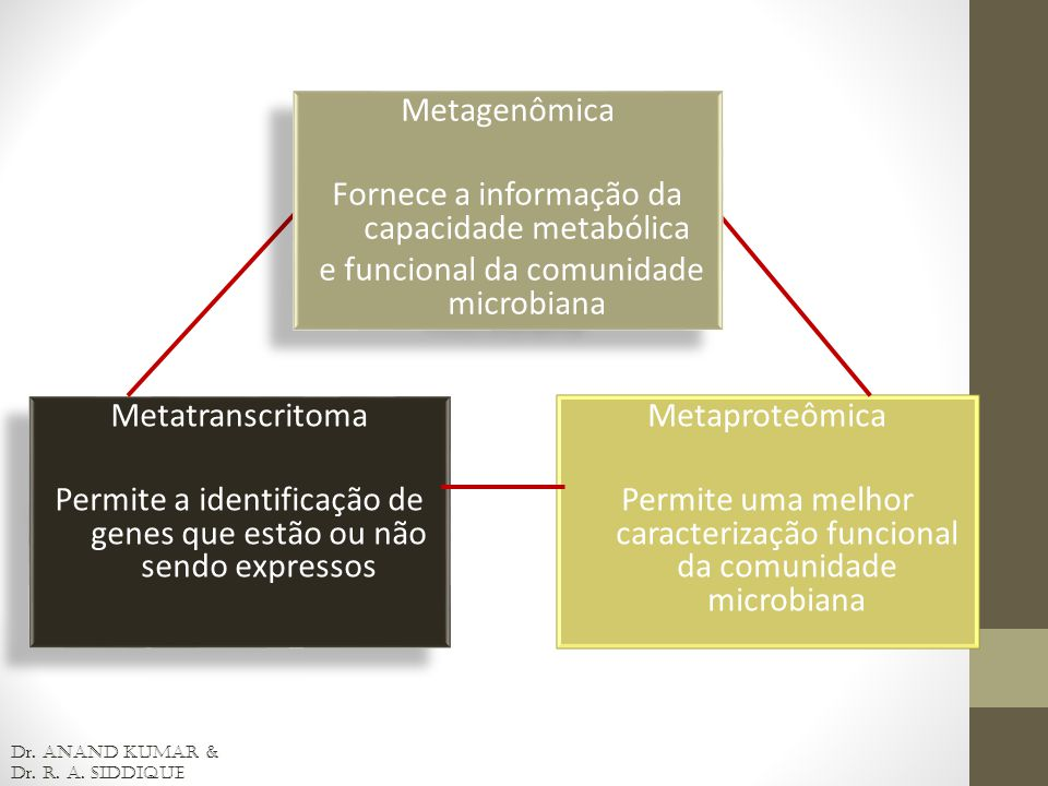 Fornece a informação da capacidade metabólica