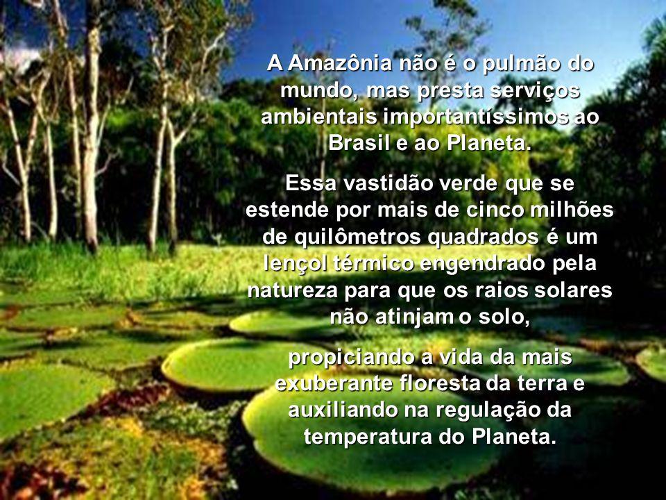A Amazônia não é o pulmão do mundo, mas presta serviços ambientais importantíssimos ao Brasil e ao Planeta.