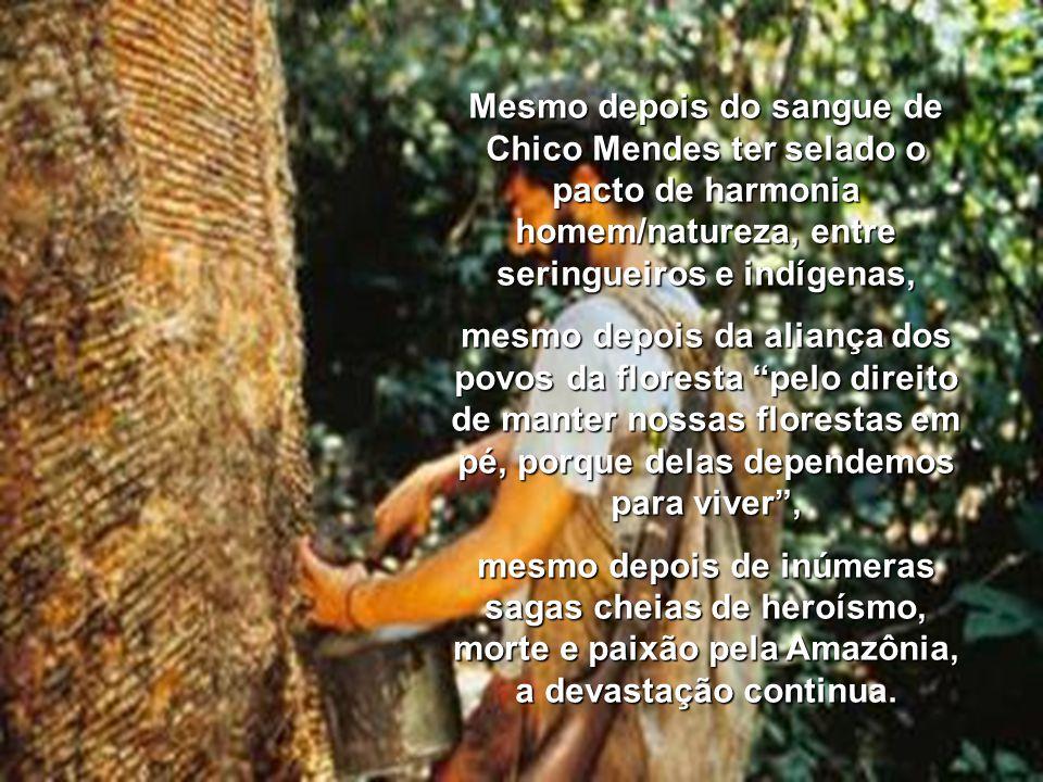 Mesmo depois do sangue de Chico Mendes ter selado o pacto de harmonia homem/natureza, entre seringueiros e indígenas,