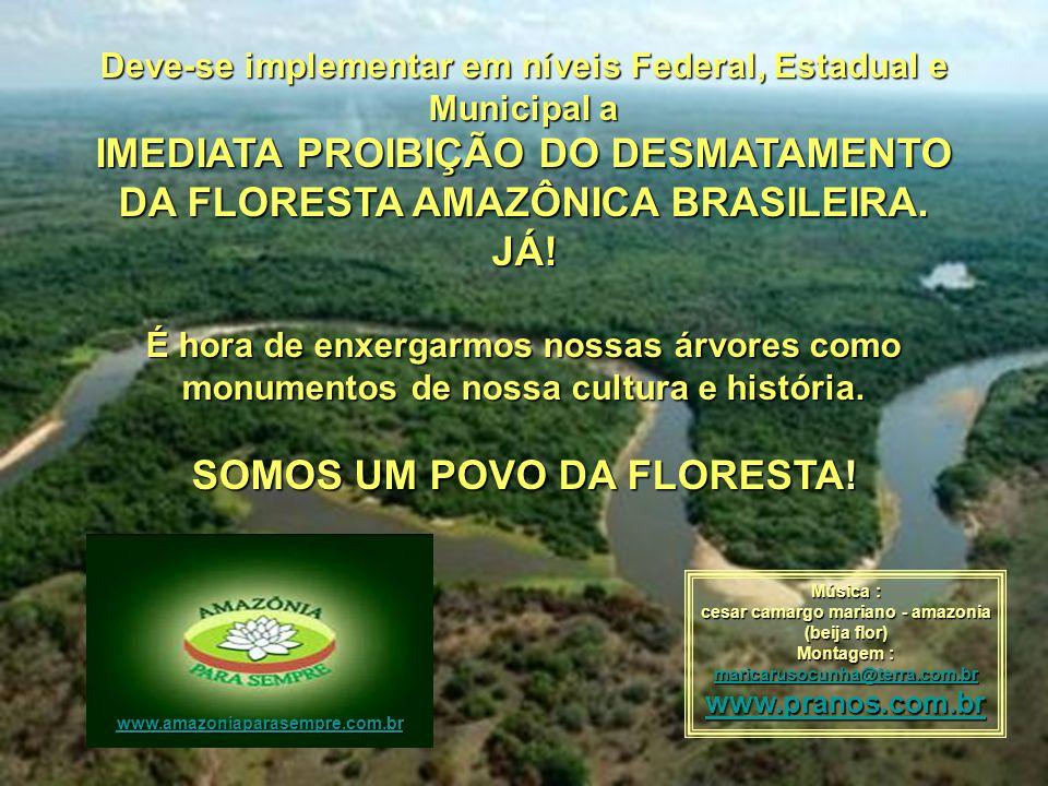 IMEDIATA PROIBIÇÃO DO DESMATAMENTO DA FLORESTA AMAZÔNICA BRASILEIRA.