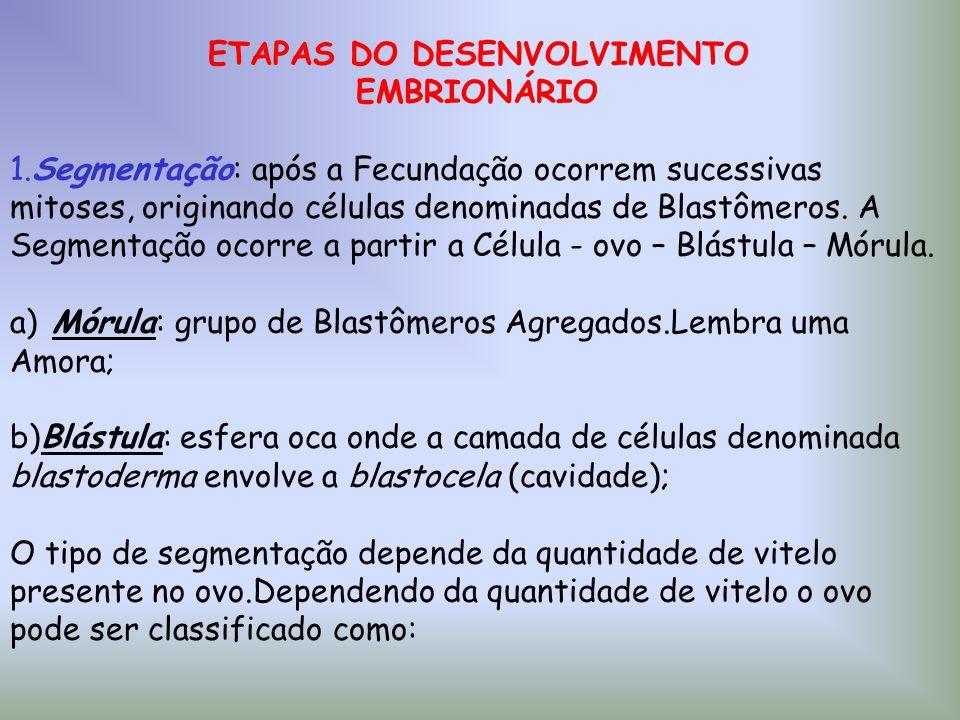 ETAPAS DO DESENVOLVIMENTO EMBRIONÁRIO 1