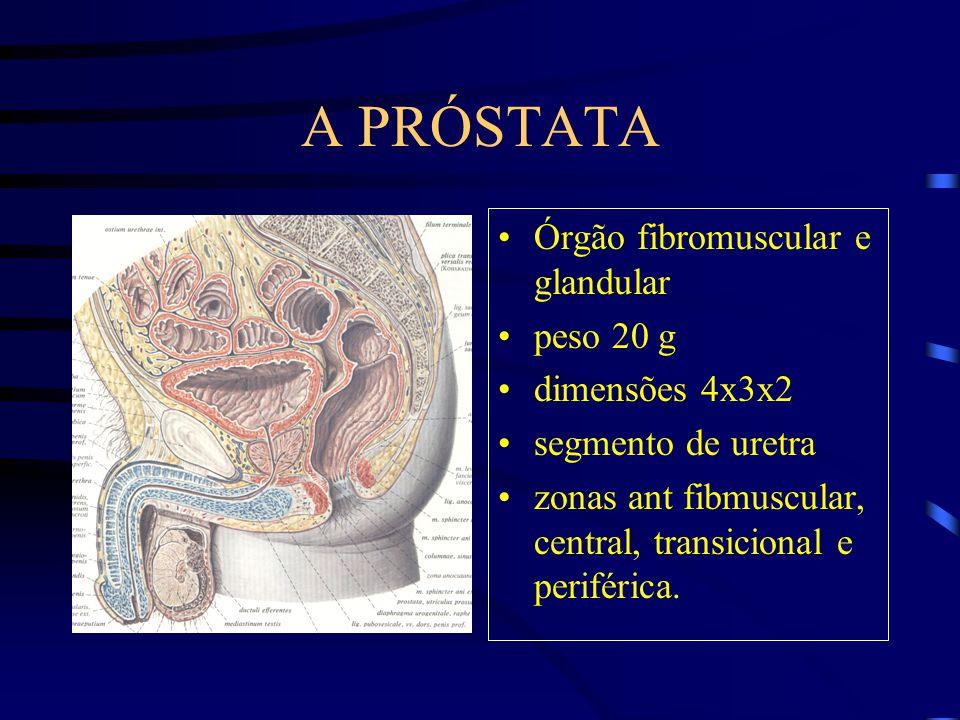 A PRÓSTATA Órgão fibromuscular e glandular peso 20 g dimensões 4x3x2