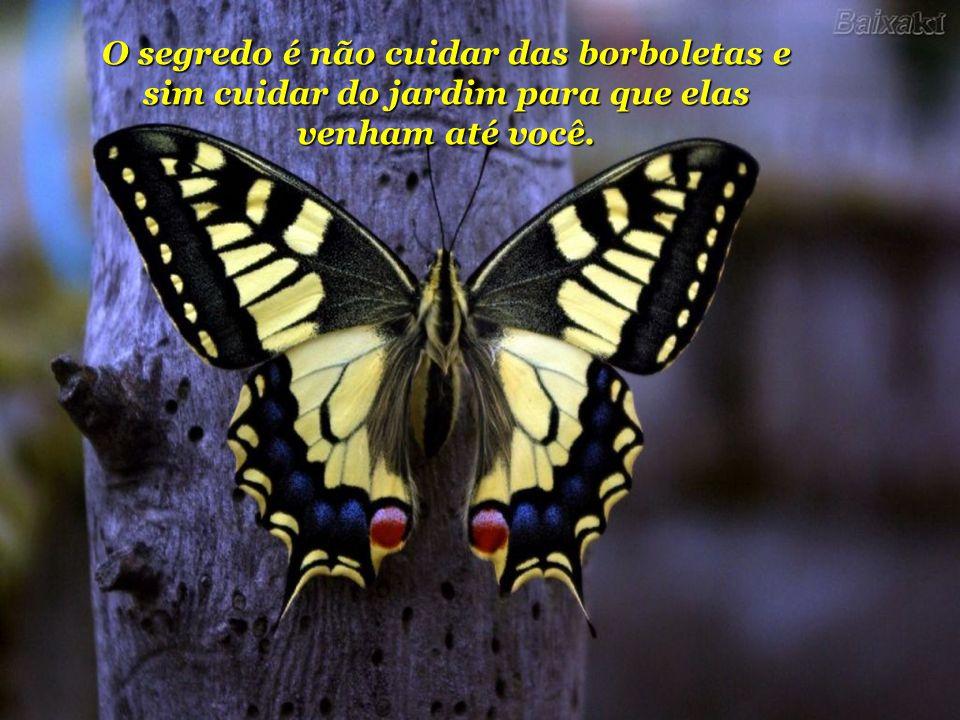 O segredo é não cuidar das borboletas e