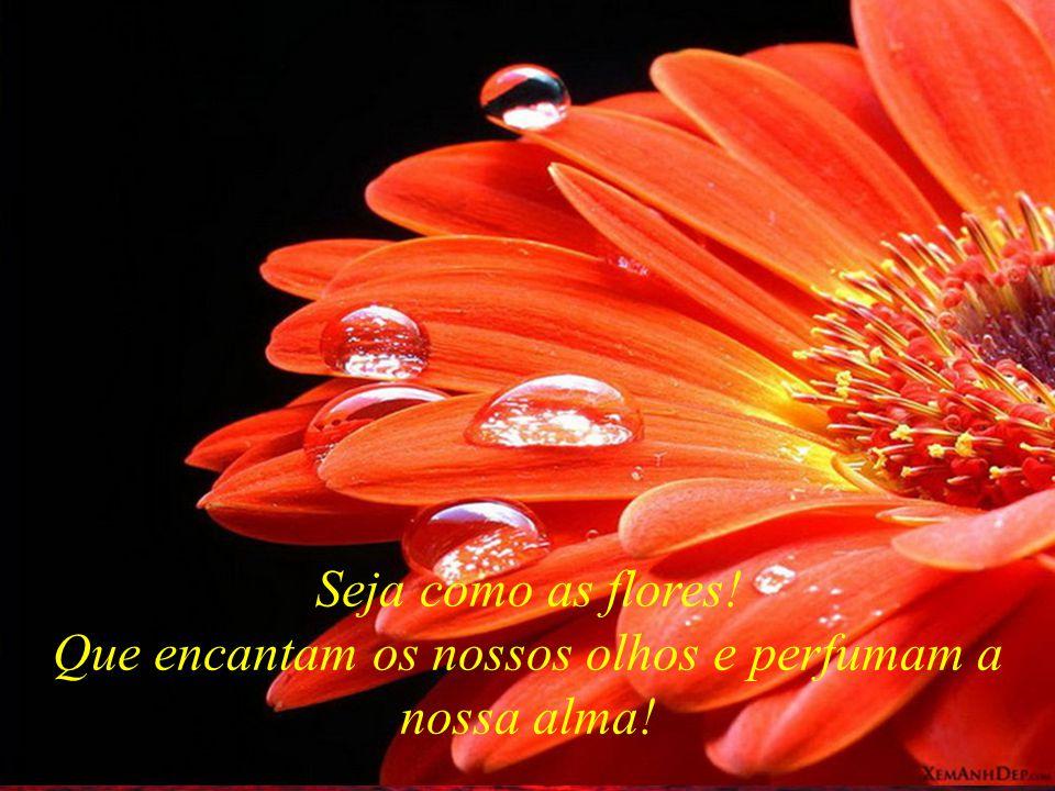 Que encantam os nossos olhos e perfumam a nossa alma!