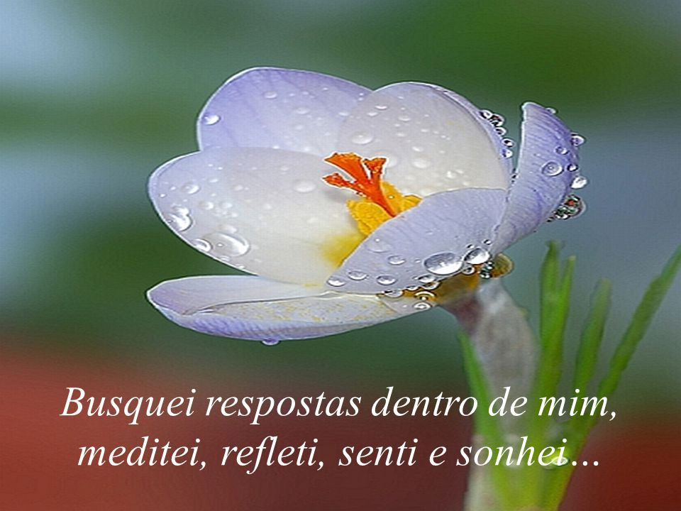 Busquei respostas dentro de mim, meditei, refleti, senti e sonhei…