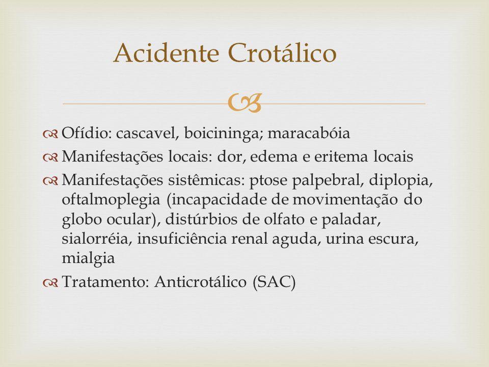 Acidente Crotálico Ofídio: cascavel, boicininga; maracabóia
