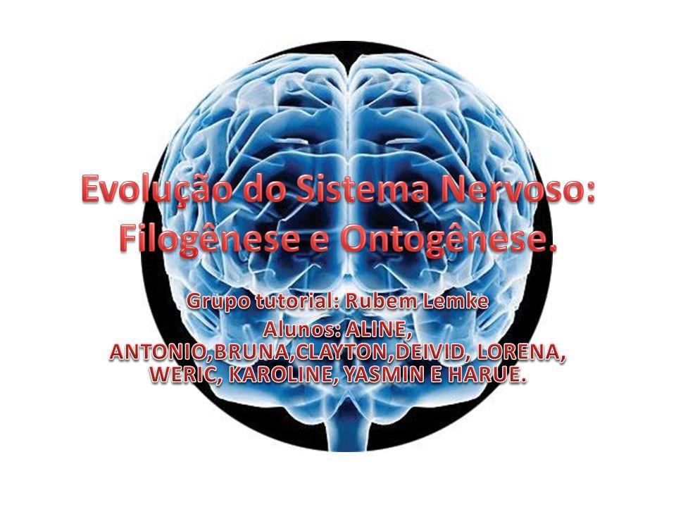 Evolução do Sistema Nervoso: Filogênese e Ontogênese.