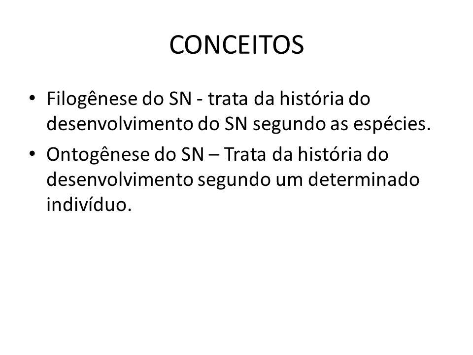 CONCEITOS Filogênese do SN - trata da história do desenvolvimento do SN segundo as espécies.