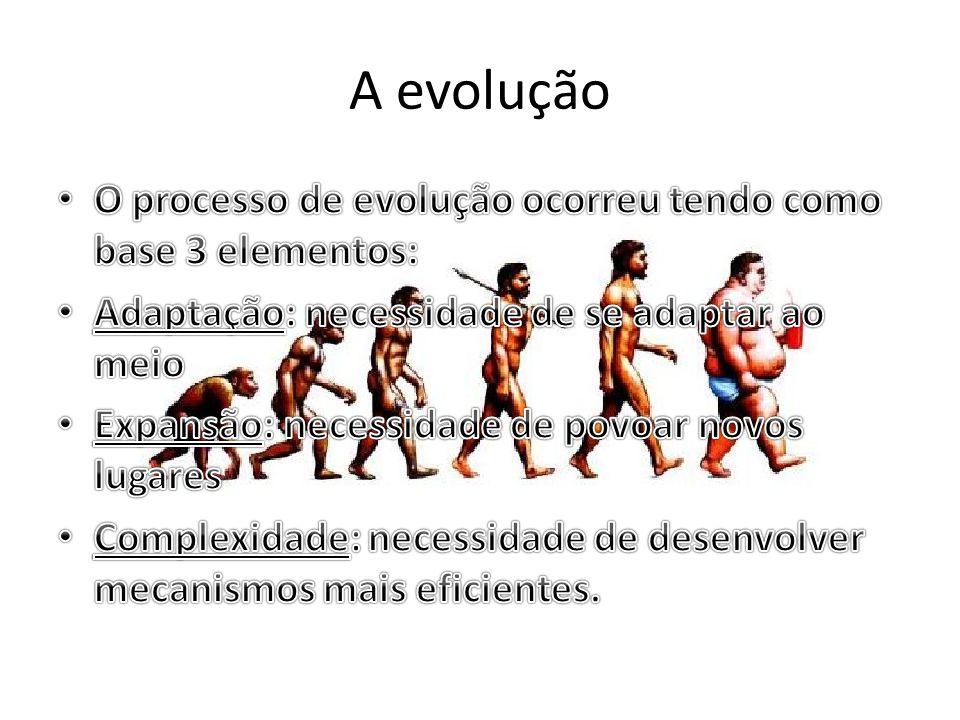 A evolução O processo de evolução ocorreu tendo como base 3 elementos: