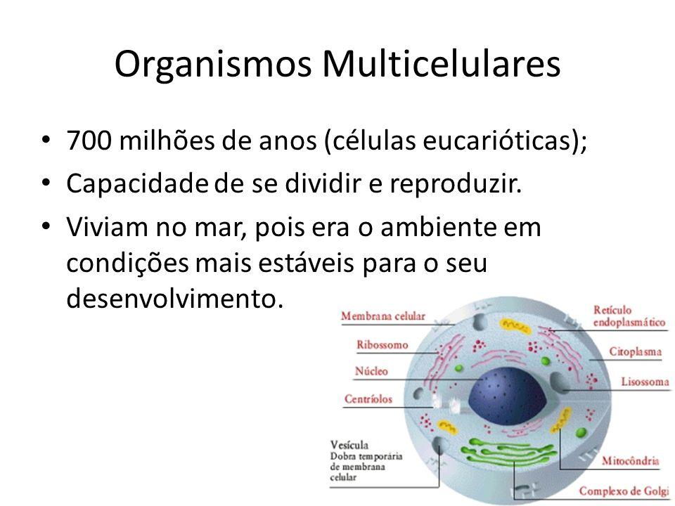 Organismos Multicelulares