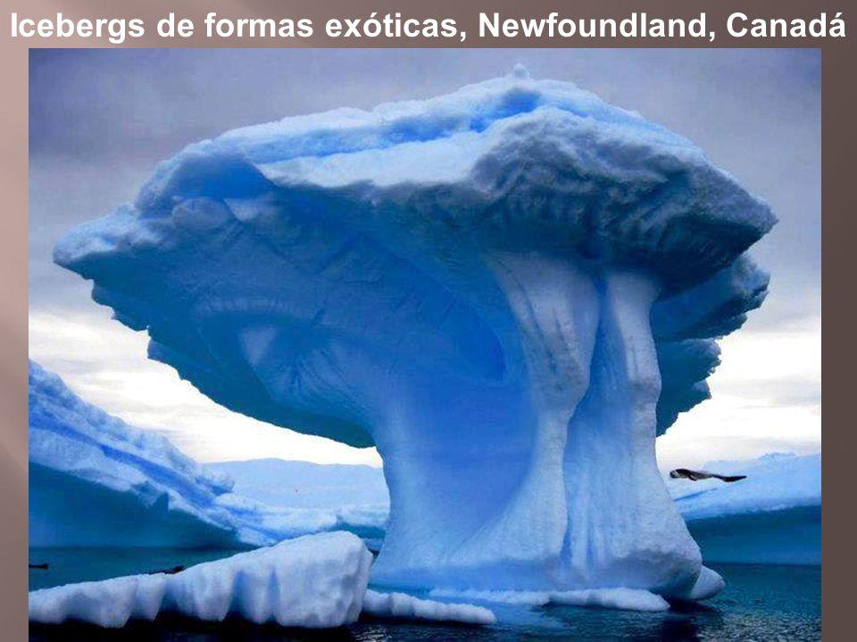 Icebergs de formas exóticas, Newfoundland, Canadá