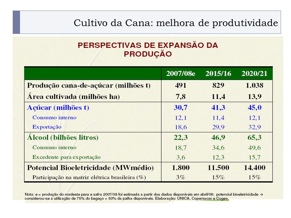 Cultivo da Cana: melhora de produtividade