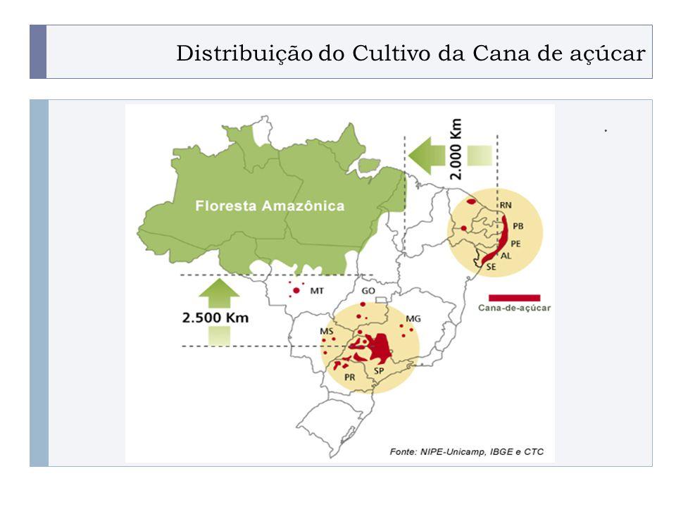 Distribuição do Cultivo da Cana de açúcar