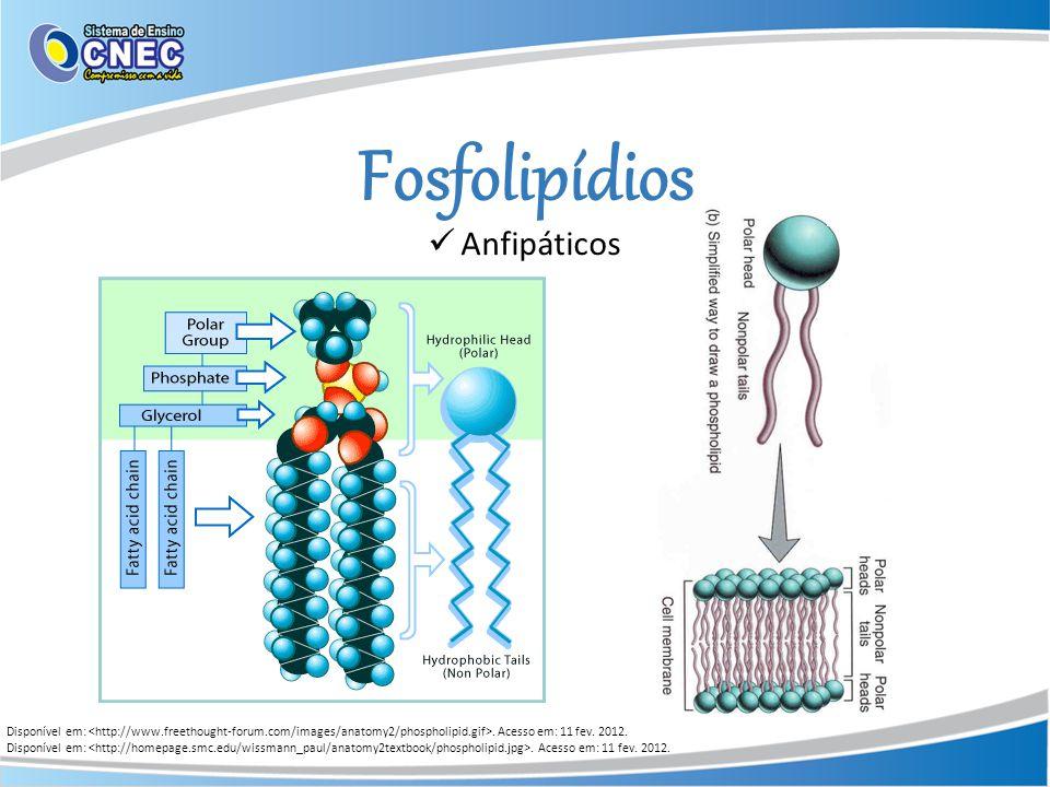 Fosfolipídios Anfipáticos