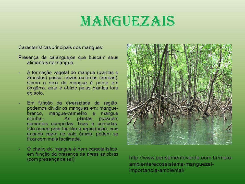 Manguezais Características principais dos mangues: Presença de caranguejos que buscam seus alimentos no mangue.