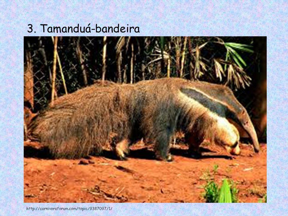 3. Tamanduá-bandeira http://carnivoraforum.com/topic/9387097/1/