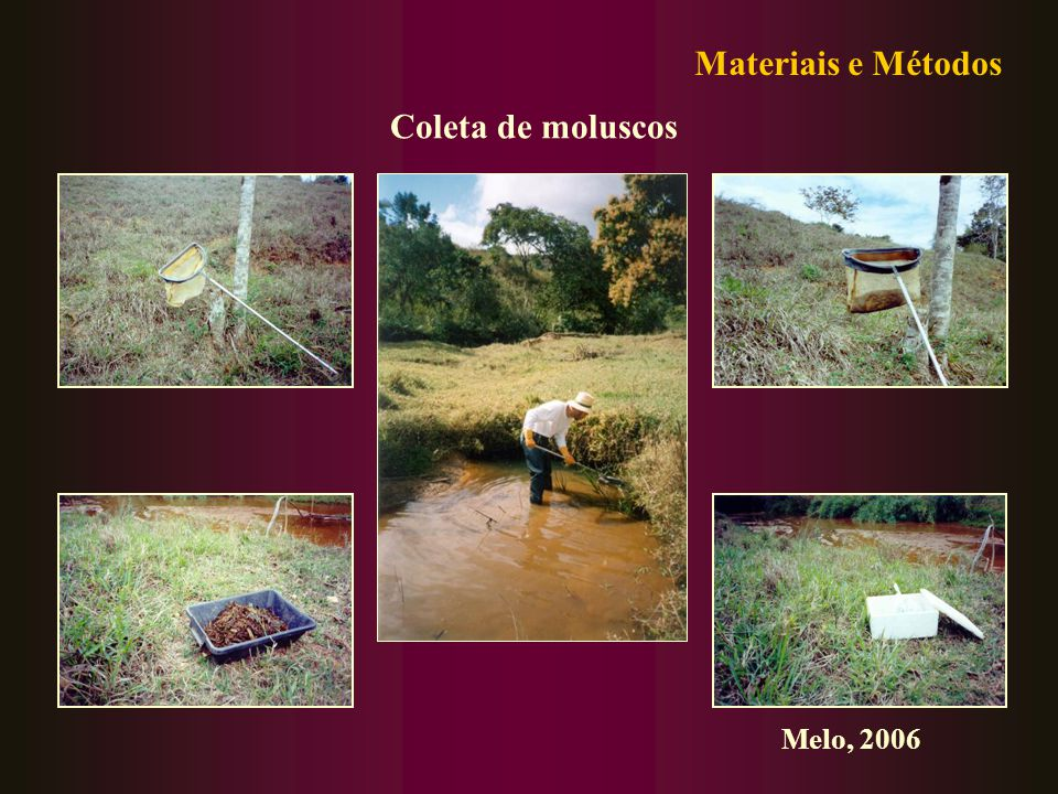 Materiais e Métodos Coleta de moluscos