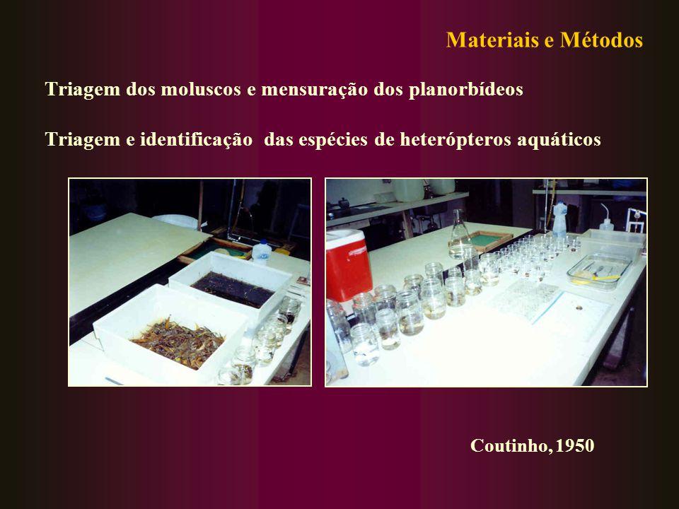 Materiais e Métodos Triagem dos moluscos e mensuração dos planorbídeos