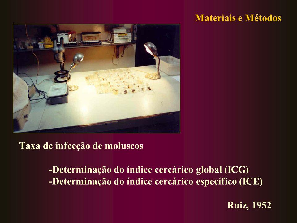 Materiais e Métodos Taxa de infecção de moluscos. -Determinação do índice cercárico global (ICG) -Determinação do índice cercárico específico (ICE)