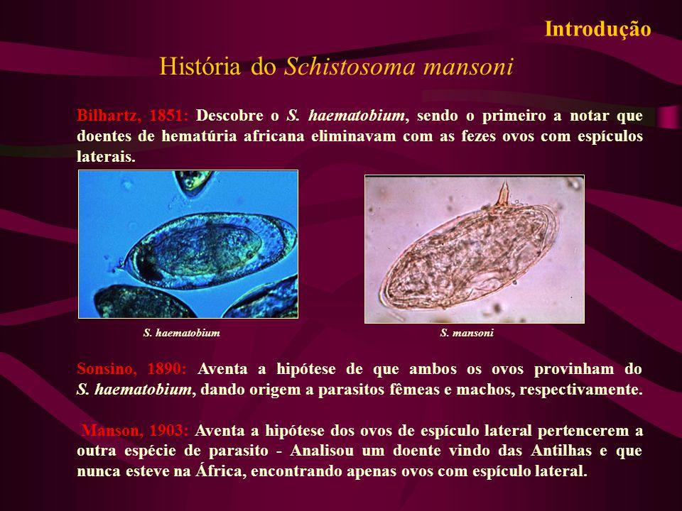 História do Schistosoma mansoni