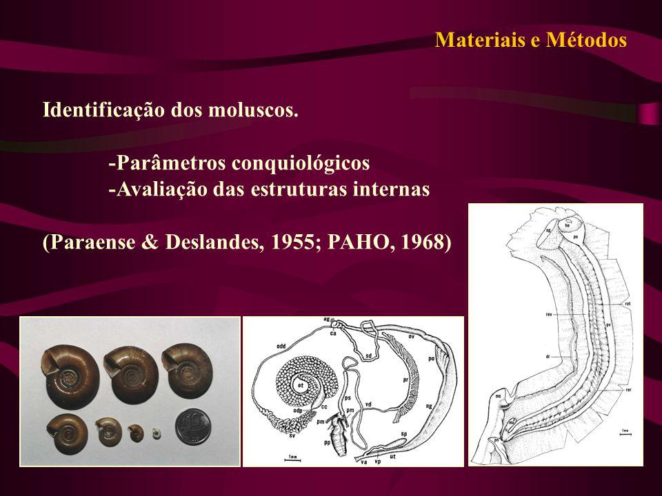 Materiais e Métodos Identificação dos moluscos. -Parâmetros conquiológicos. -Avaliação das estruturas internas.