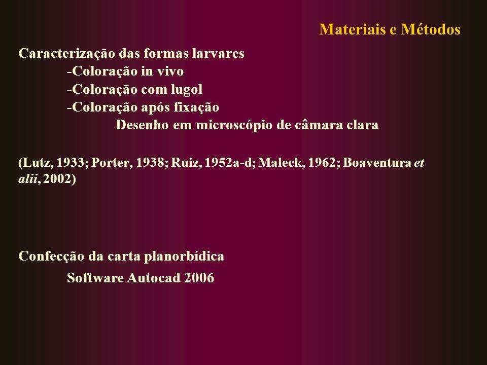 Materiais e Métodos Caracterização das formas larvares