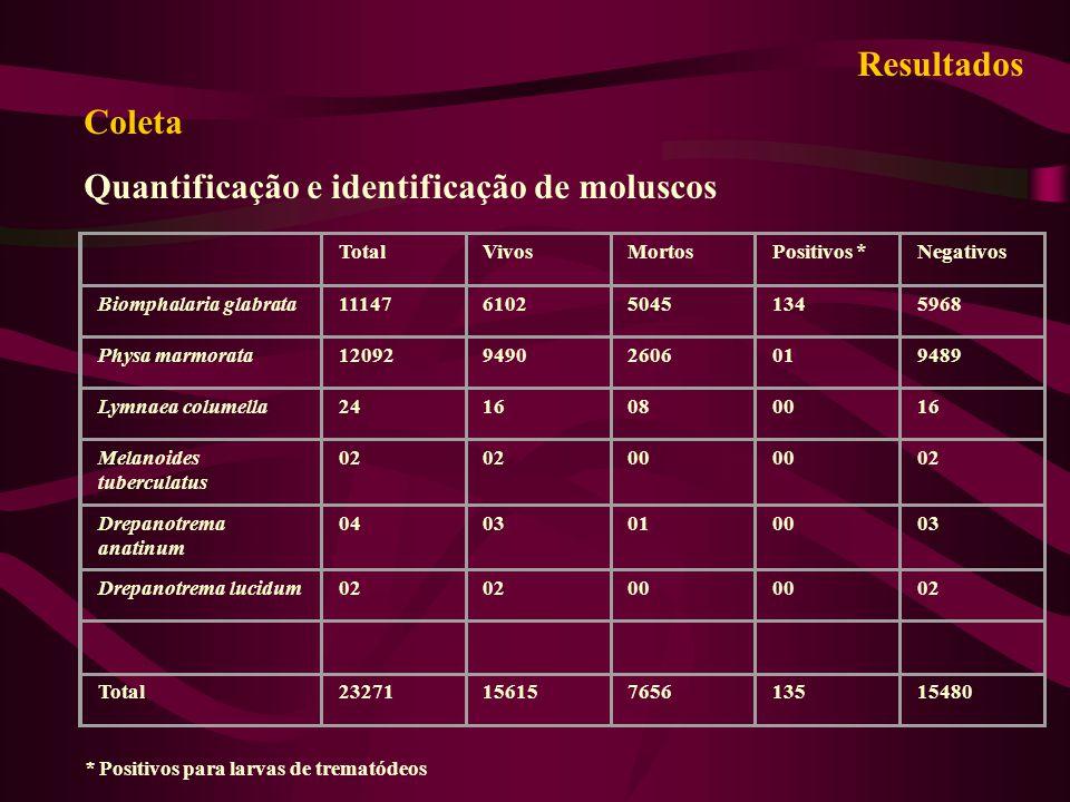 Quantificação e identificação de moluscos