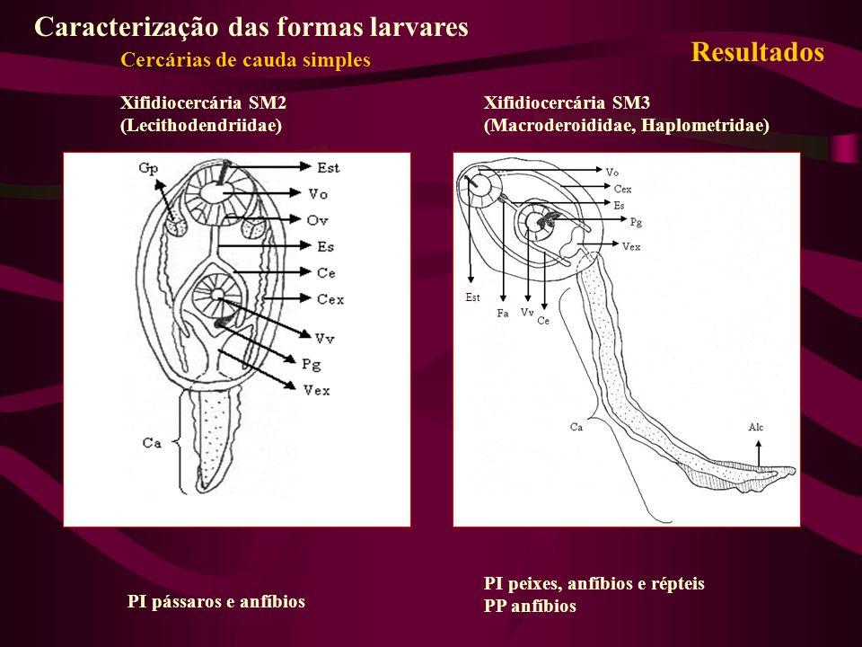 Caracterização das formas larvares Resultados