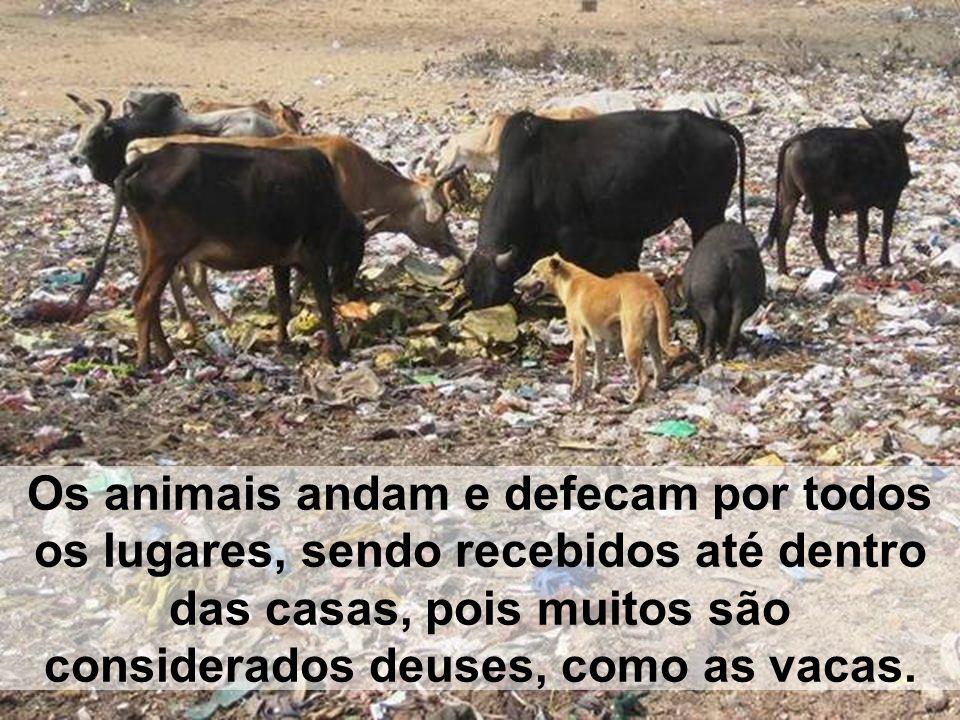 Os animais andam e defecam por todos os lugares, sendo recebidos até dentro das casas, pois muitos são considerados deuses, como as vacas.
