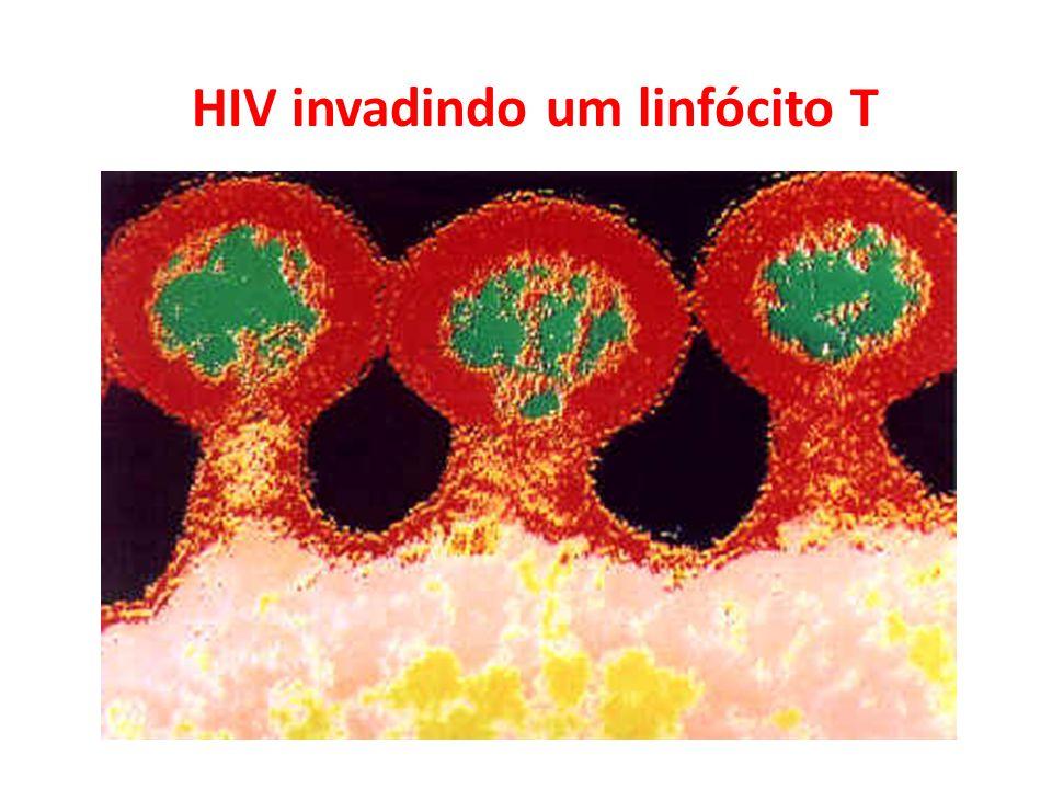 HIV invadindo um linfócito T