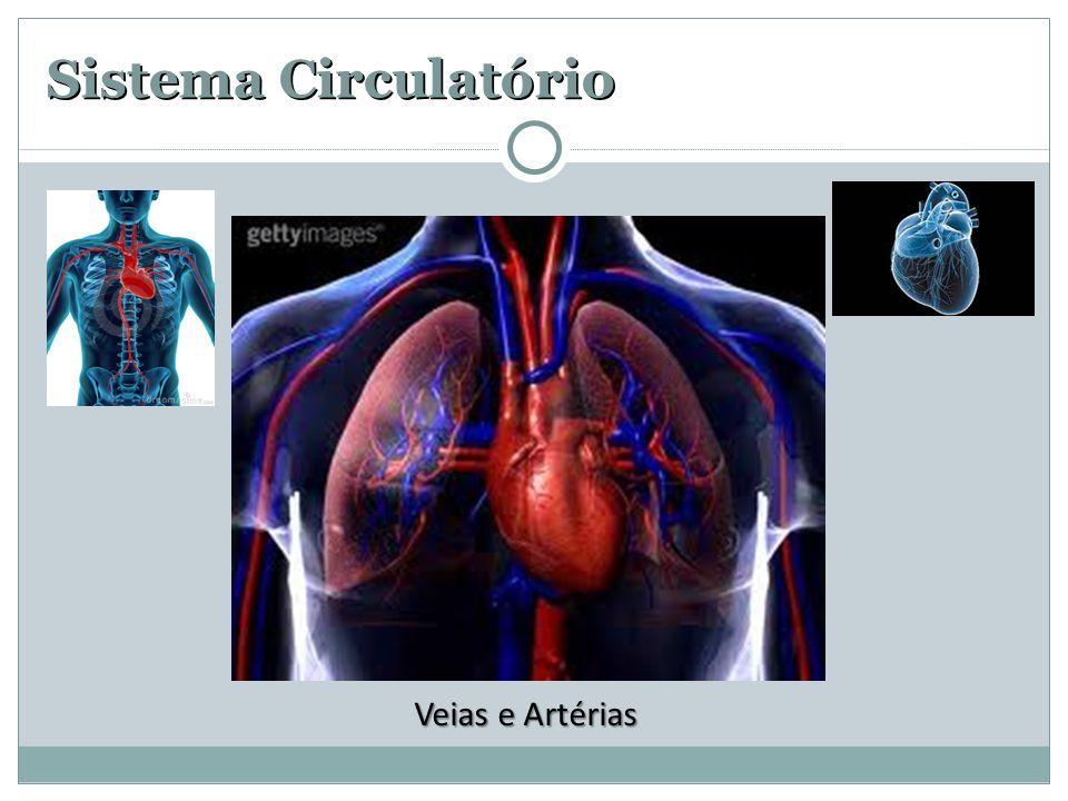 Sistema Circulatório Veias e Artérias